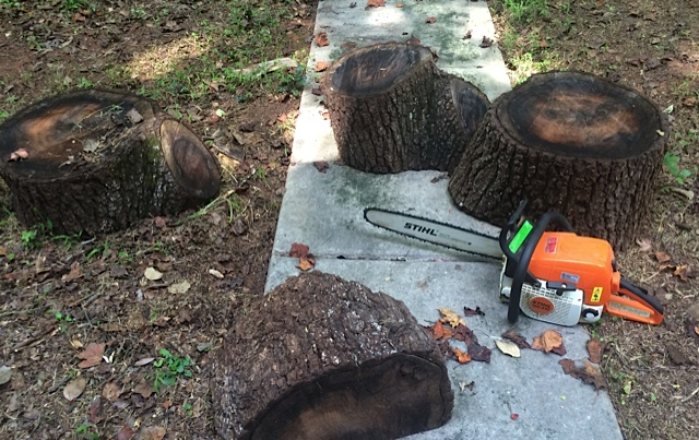 Stumps in the walkway.  Saw for scale.