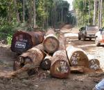 Saving Rare Woods